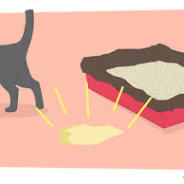 So, your cat will not use the litter box…