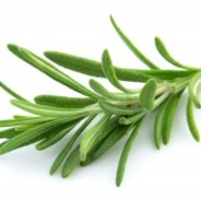 Medicinal Rosemary for your Dog or Cat's Health